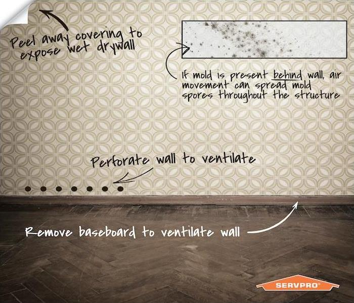 infographic about wall paper